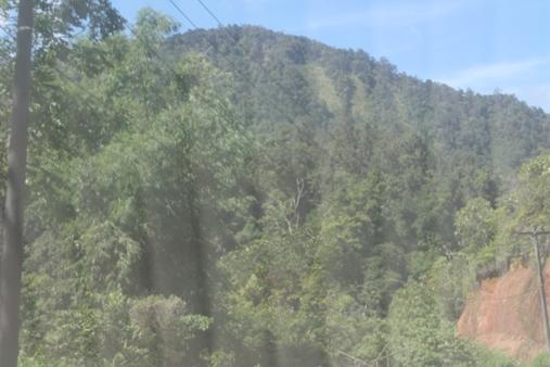 Pengakuan_hutan_adat